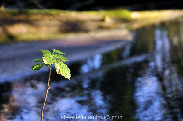zen winter water ...