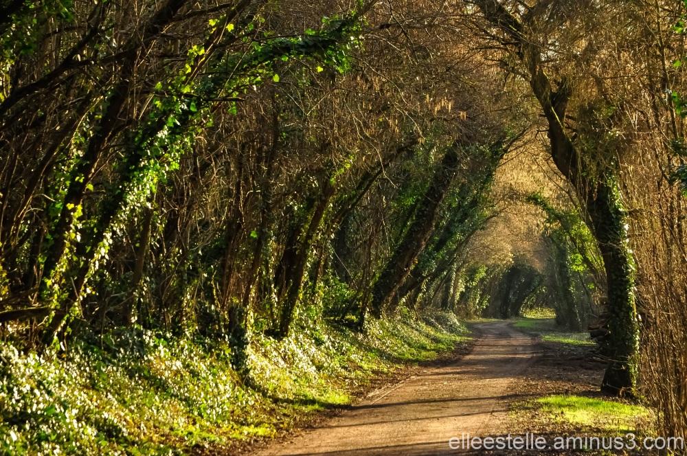 La forêt, plaisir des sens ...