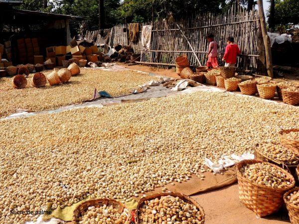 Séchage du sucre de palme