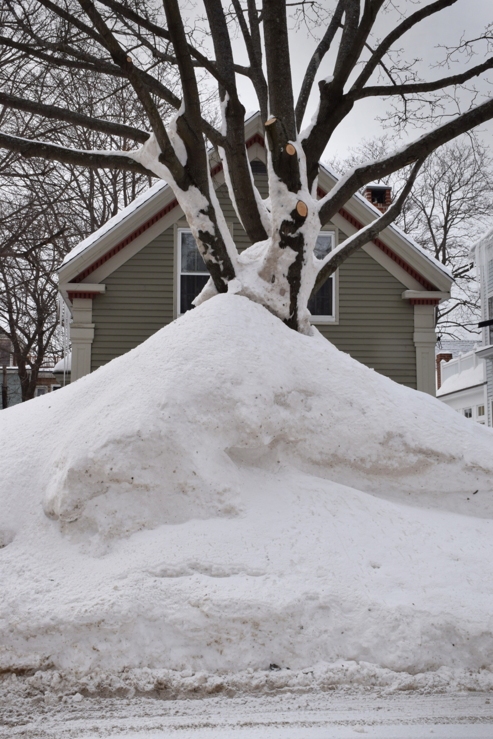 tall mound of snow with tree hides house