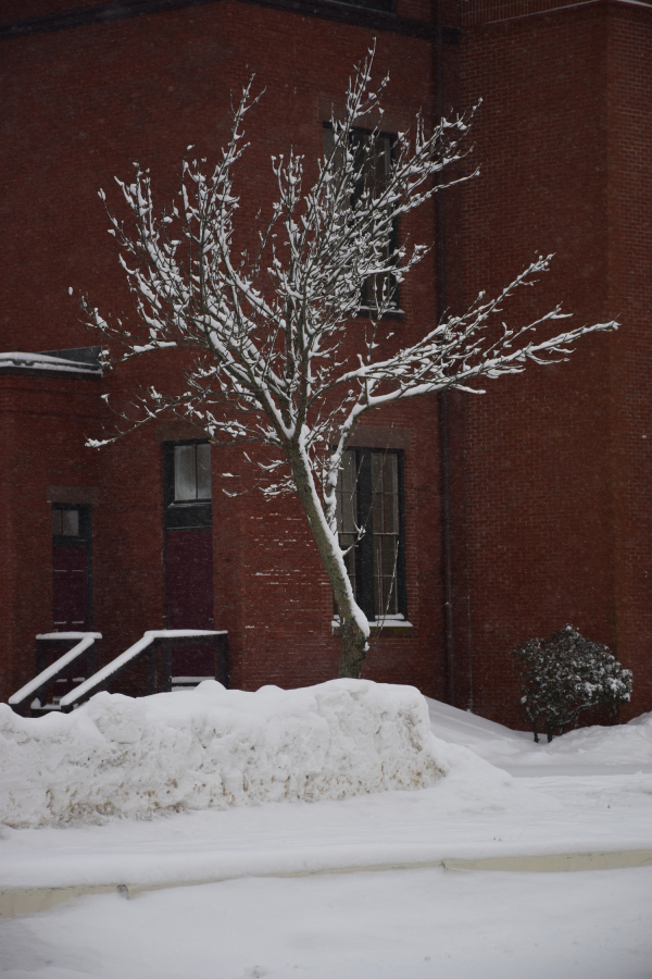A single snow-laden tree in front of brick wall