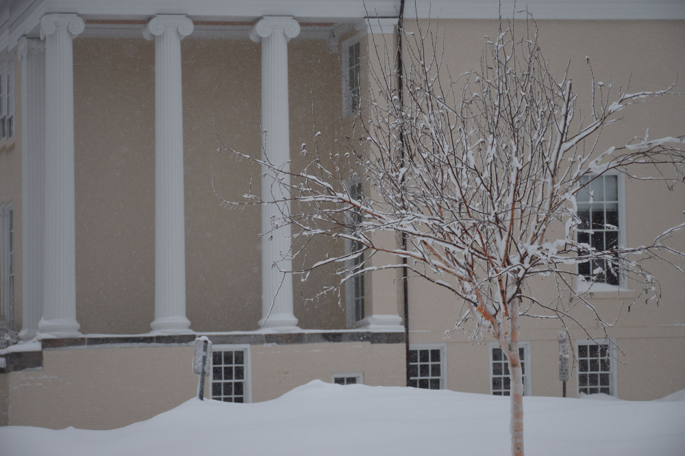 a river birch in front of ionic columns