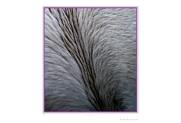 Oh Horse Feathers!