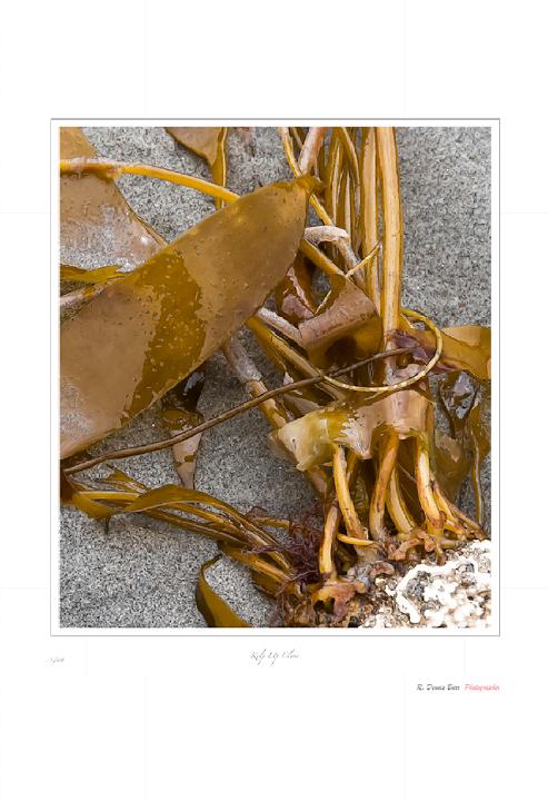 Kelp Up Close