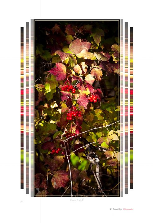 Berries In Fall