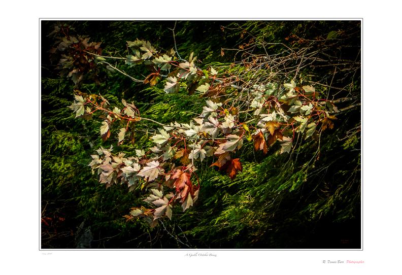 A Gentle October Breeze