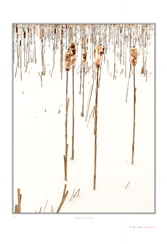 Cattails And Snow