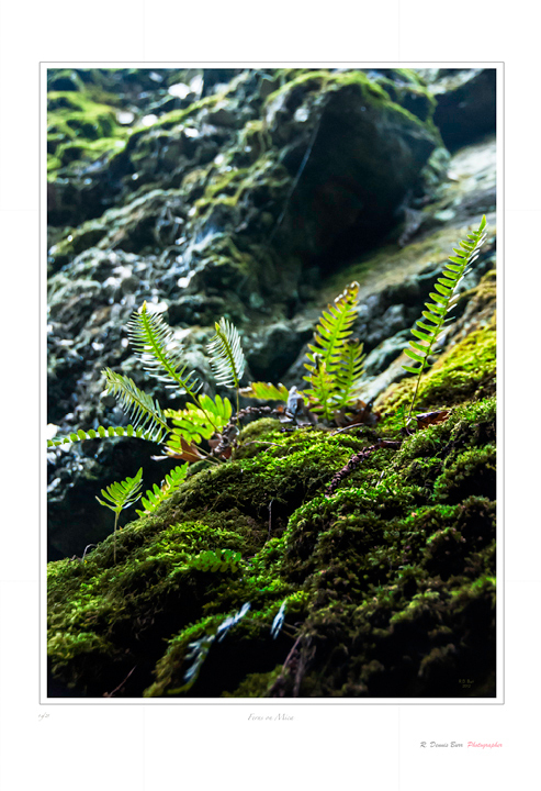 Ferns on Mica