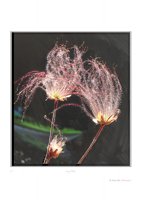 Smurf Plant