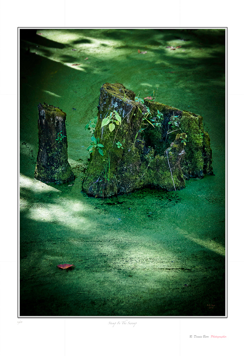 Stump In The Swamp
