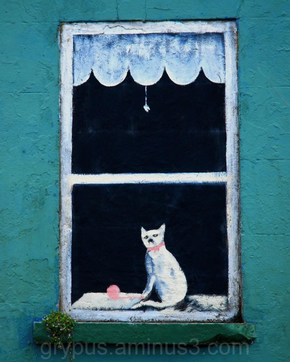Chat Dans La Fenêtre
