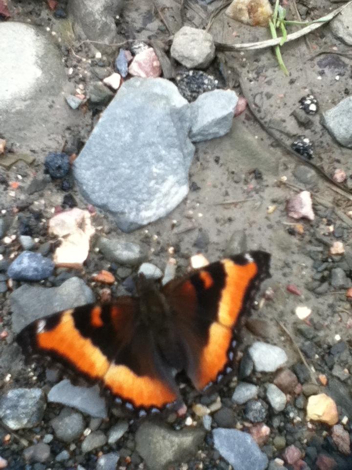 Butterflies are interesting creatures