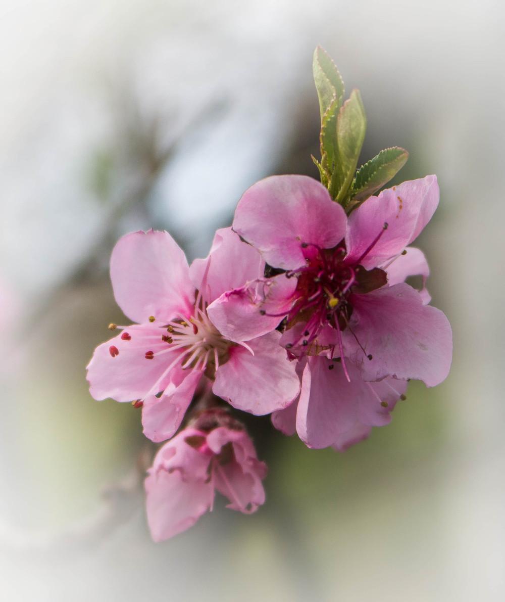 le printemps est bien là!