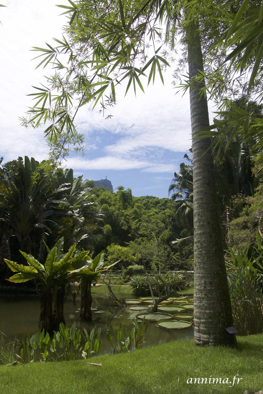 botanical garden, Rio
