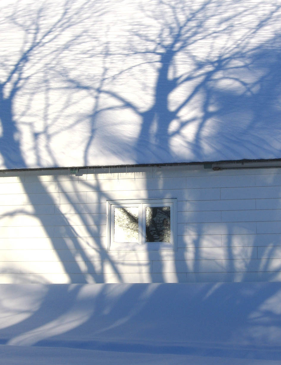 tree branches reflected on snowy curch