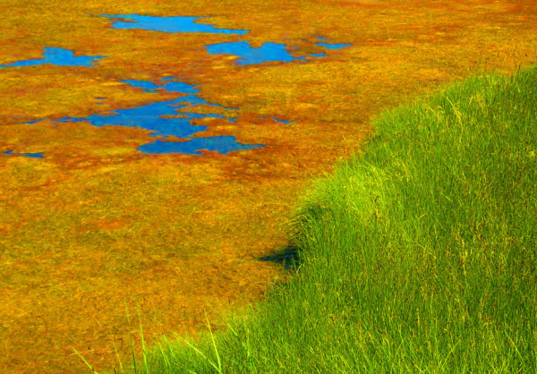 abstract shot of calm swamp