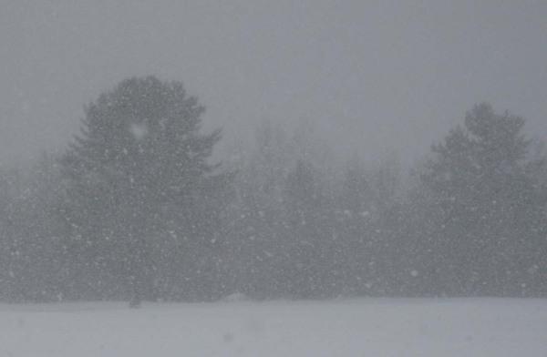 snowstorm in grey landscape