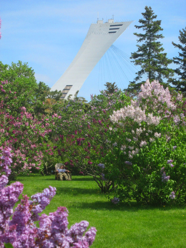 Montreal olympic stadium from botanical garden