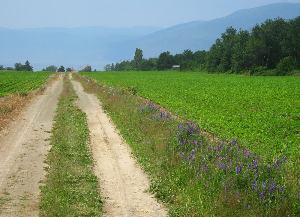 Country way in Charlevoix, Quebec