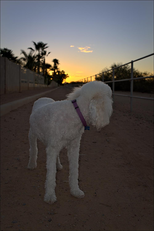 Pre-sunrise Abby...