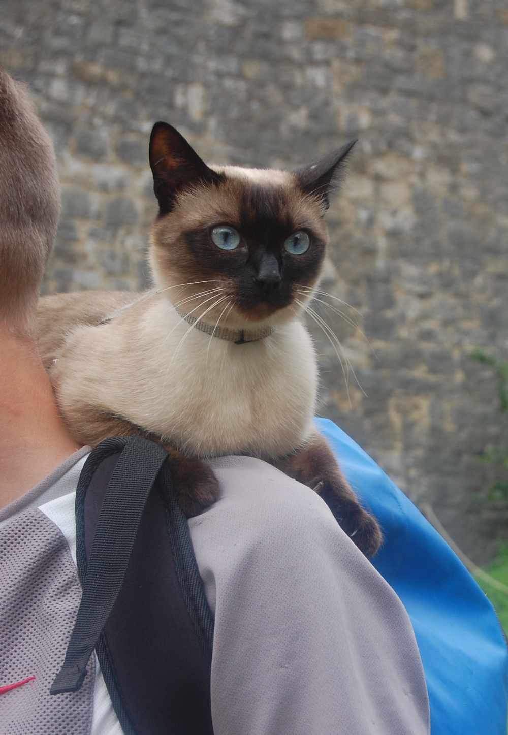 Cat riding his human's shoulder at a fair