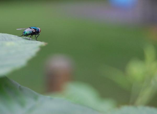 A fly sitting on a leaf