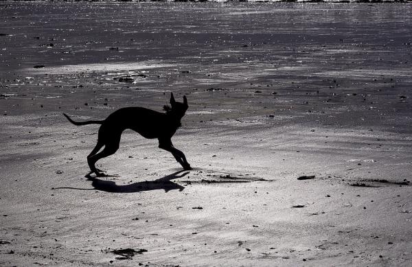 contre jour chien plage