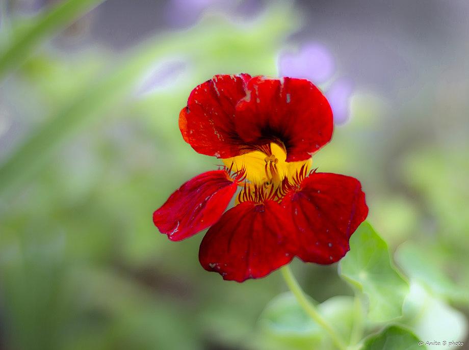 Poésie florale ... 1/2