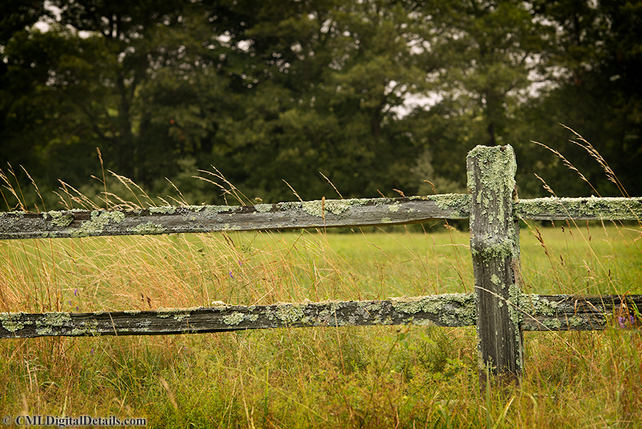 Lichen Covered Fence