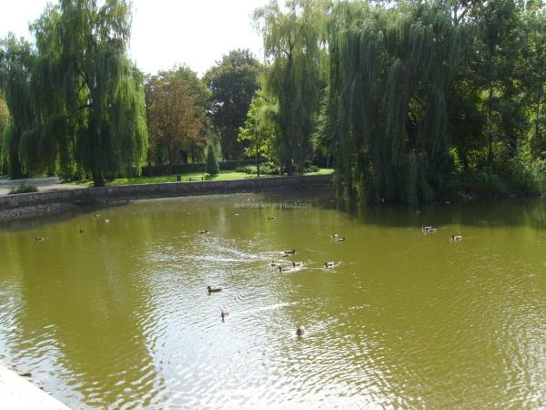 Pond  in  Ivano - Frankivsk  park