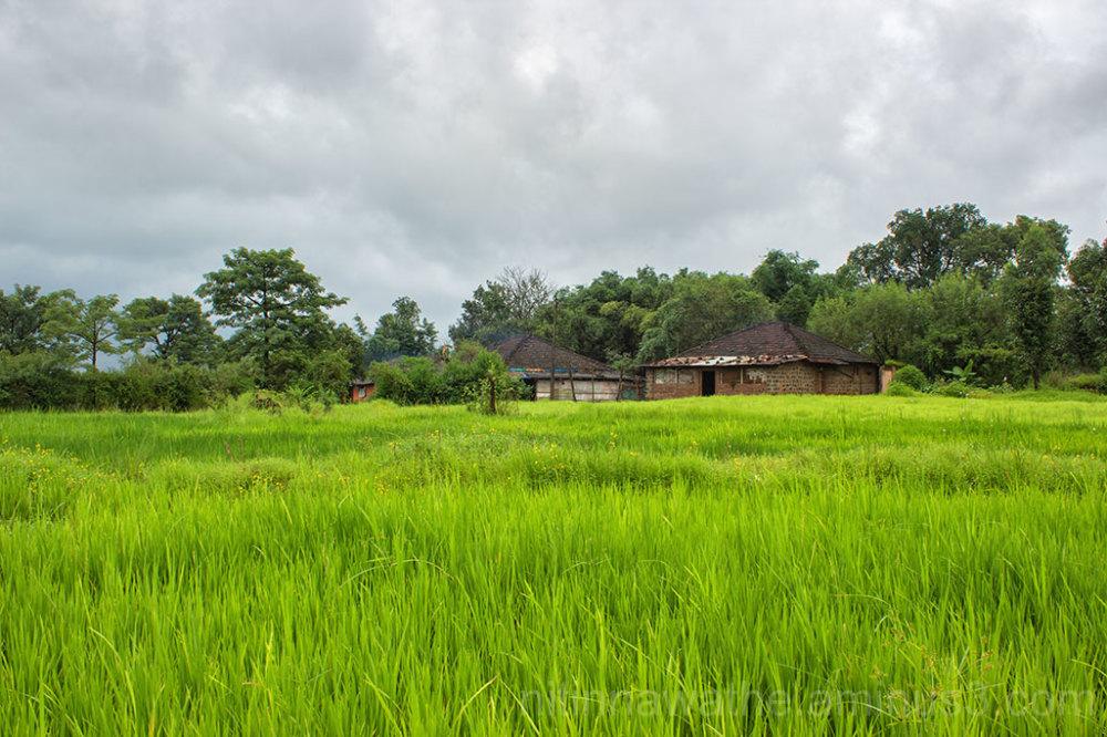 Farmhouse paddy field