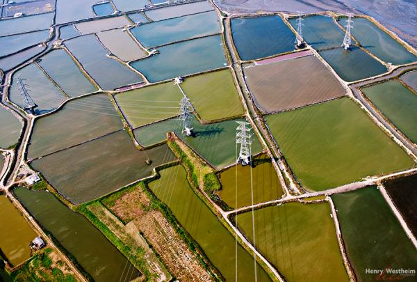 Aerial view of rice farmland, Taiwan