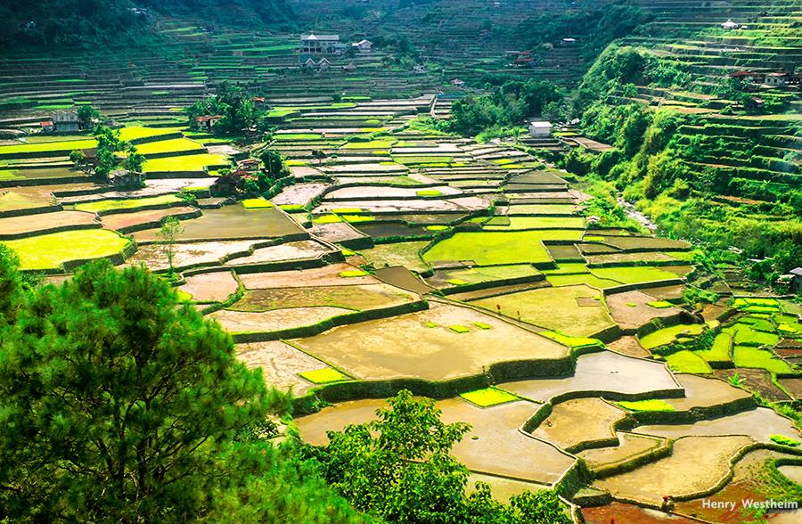 Philippines, Luzon, Banaue, Tiered Rice Terraces