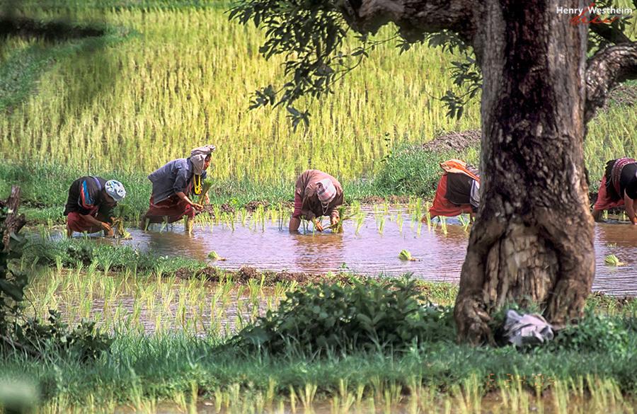 Karen Hill Tribe Women Farming Thailand Chiang Mai