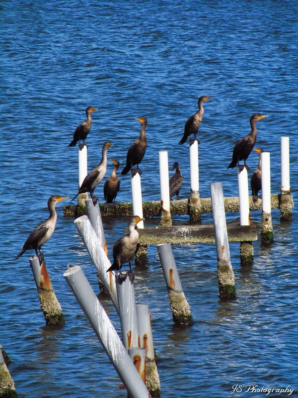 Group of birds perched on pylon