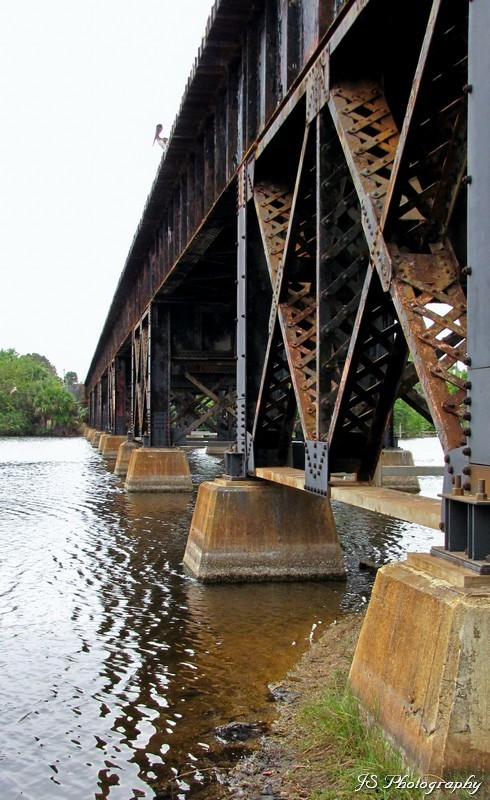 Crossing Crane Creek