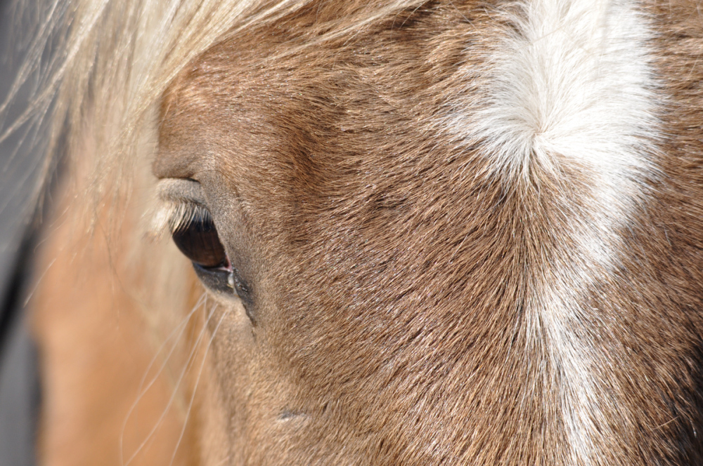 the eye of a horse