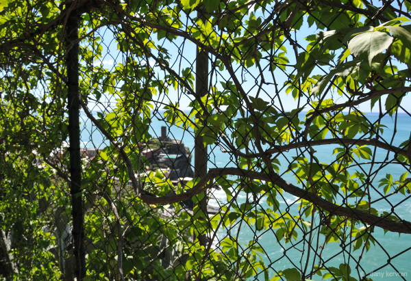 view on Vernazza through a vegetal wall