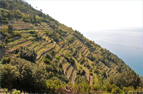 Manarola (Italy), view on the vineyard