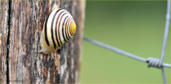 a snail on a trunk