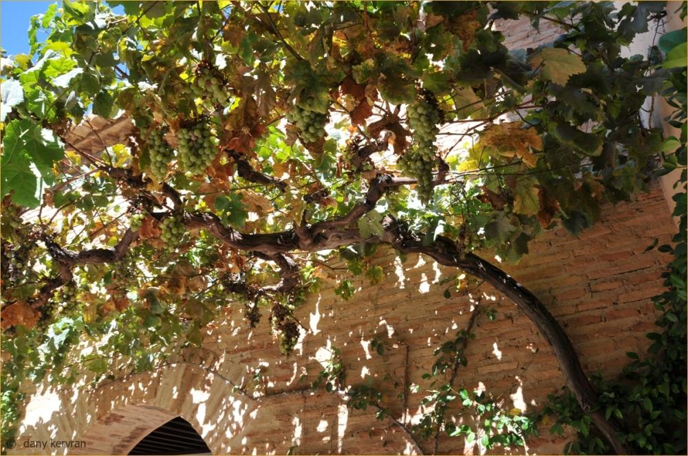 Alhambra : vine arbour