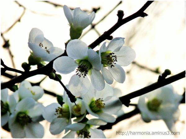 Hiver ou printemps ?