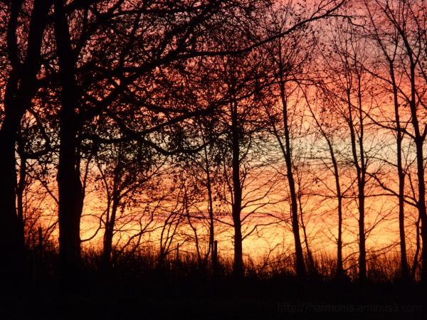 L'aube aux Aubeaux