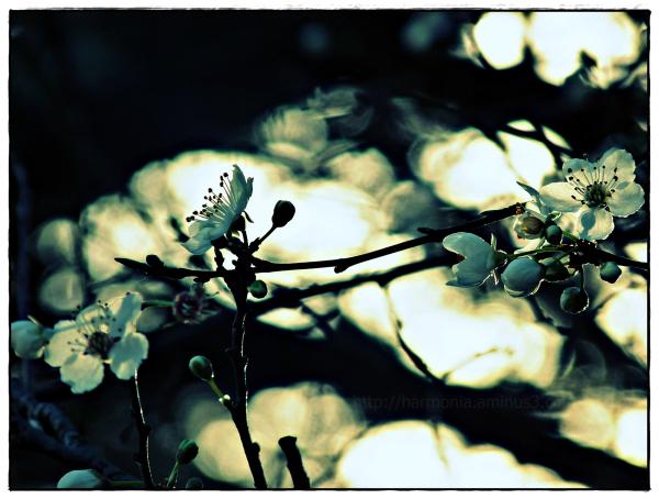 Quand le printemps s'immisce au coeur de l'hiver