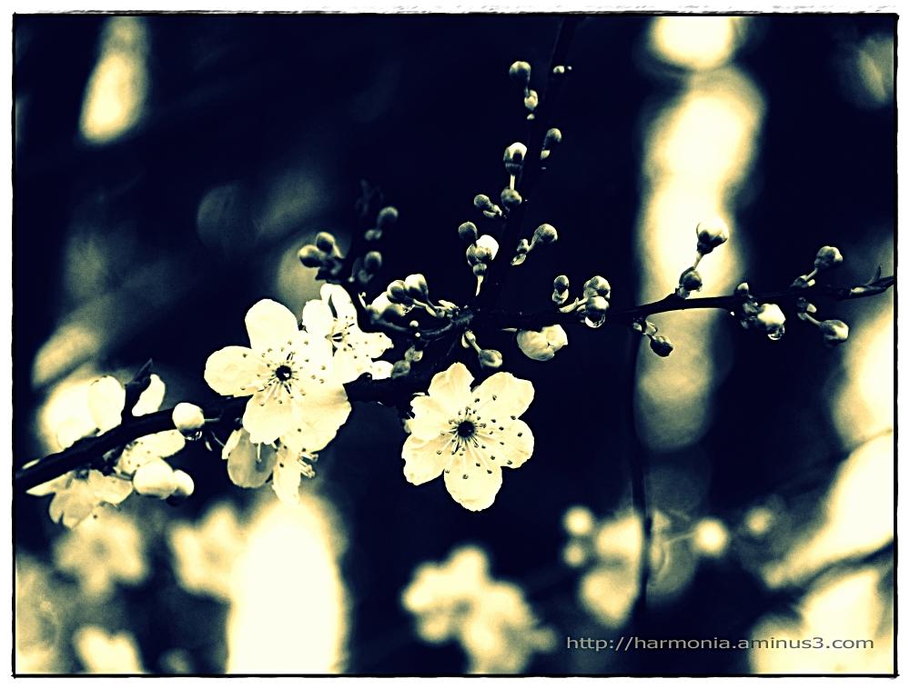 Entre hiver et printemps