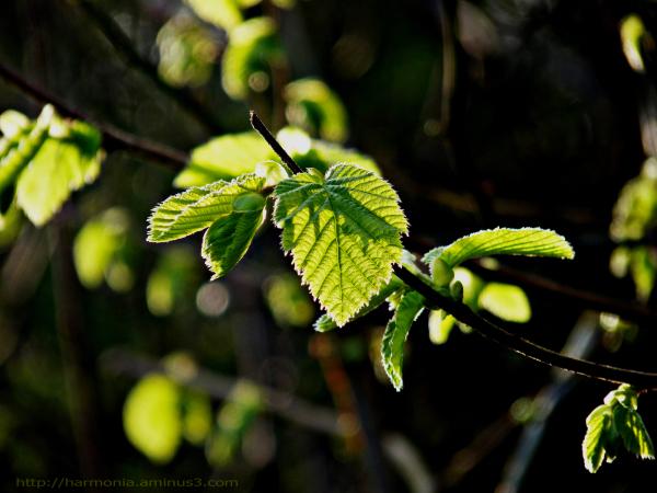 Le retour du vert