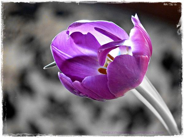 Une fleur qui danse