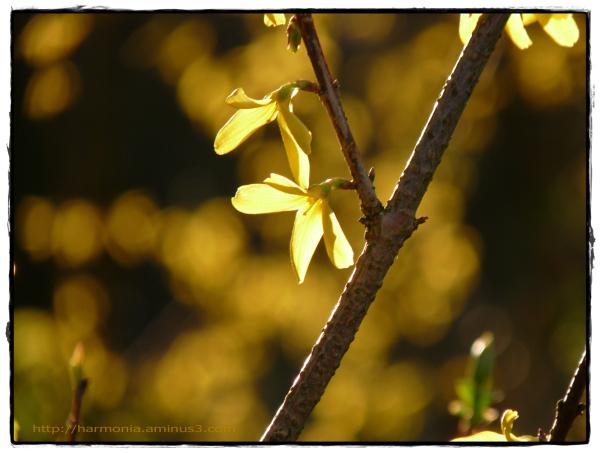 Dans les or du soir
