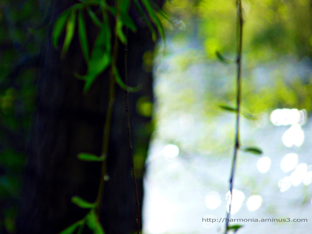 Forest dream (2)