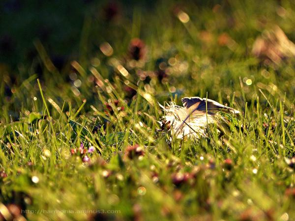 Une histoire de plume, de lumière et d'herbe...